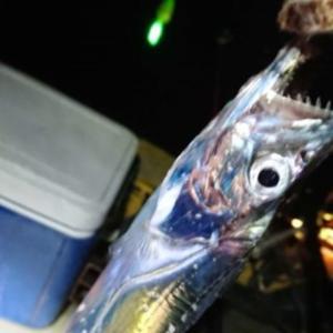 おかず釣り師が行く!「待ちかねて 太刀魚の波止 駆けつける」#テンヤ #キビナゴ #ジグヘッドワーム