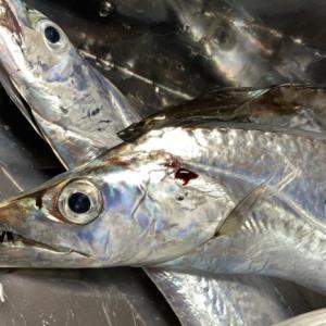 おかず釣り師が行く!「様々な 釣り方試し 反省し」#太刀魚釣り #波止釣り #餌釣り  #ルアー釣り