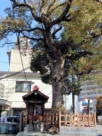 【観】楠地蔵尊