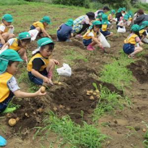 ジャガイモ掘り、今年は各学年ごとです