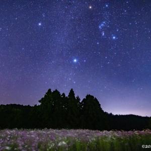 目が覚めるような美しい景色!!~コスモス畑と星空の風景~