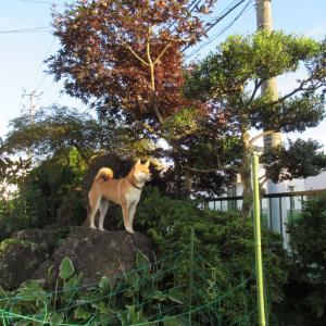 庭で遊んでいます