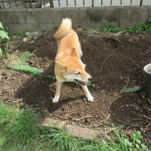 今日も庭遊び