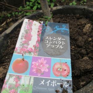 姫コブシとリンゴの木