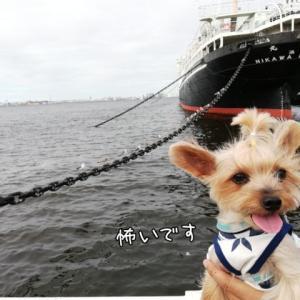 横浜へGO! 山下公園編