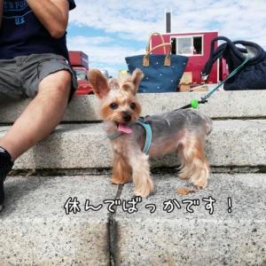 駒沢公園わんこ祭り その①