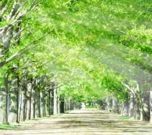 身体のバランスを整えるバランス療法 緑の多い街 花尻の整骨院