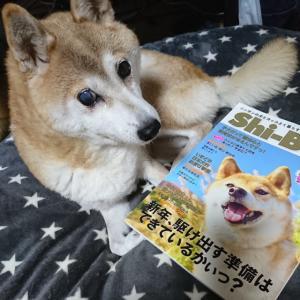 【2020年1月号 SHI-BAに掲載されました】緑内障の柴犬 一五の闘病