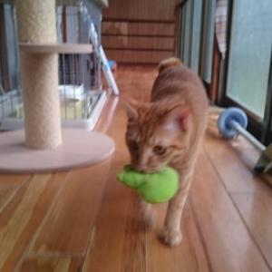 【猫の膀胱炎】なかなか手ごわかった:診察3回目
