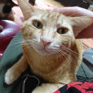 【猫の膀胱炎】先週のその後:診察2回目