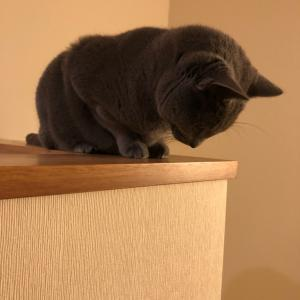 そんな猫様エサが気に入らないと朝から大暴れ