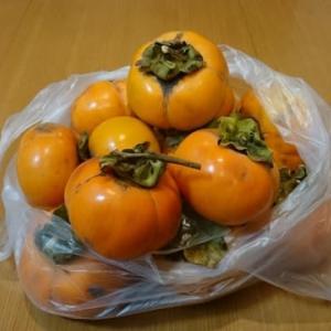 柿のセミドライフルーツ
