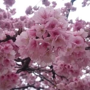 桜☆散り際のサイン