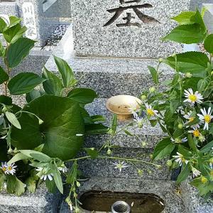 10/15  墓参り