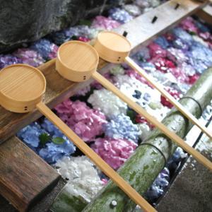 梅雨の癒しのあじさい、お手水とのコラボが素敵すぎた神社