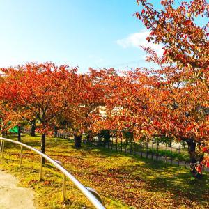 秋晴れの土曜日