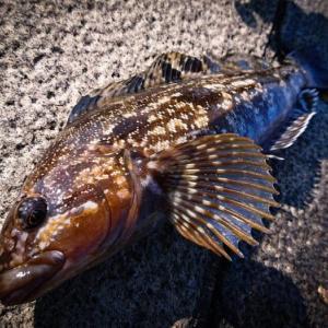 1月の堤防釣りで釣れる魚とおすすめの釣り方