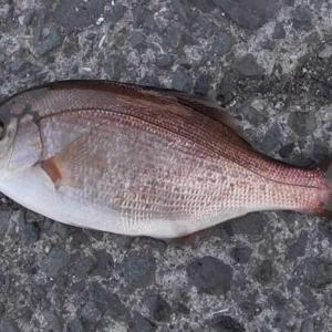 2月の堤防釣りで釣れる魚とおすすめの釣り方