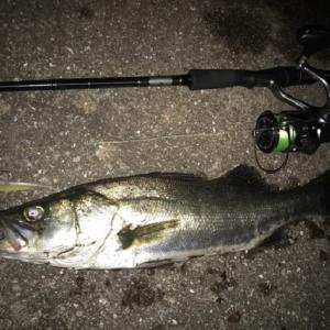 3月の堤防釣りで釣れる魚とおすすめの釣り方