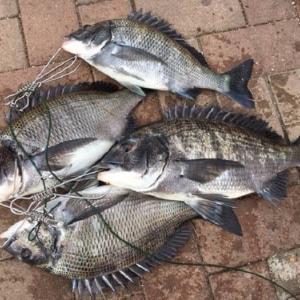 4月の堤防釣りで釣れる魚とおすすめの釣り方