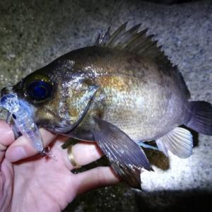 5月の堤防釣りで釣れる魚とおすすめの釣り方