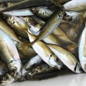 9月の堤防釣りで釣れる魚とおすすめの釣り方
