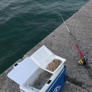 胴突き仕掛け:初心者向けの簡単な探り釣り仕掛け