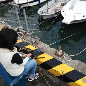 ウキ釣り仕掛け:初心者向けの簡単な五目釣り仕掛け
