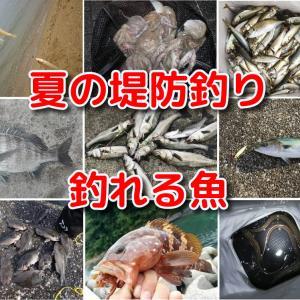 夏の堤防釣りで釣れる魚~昼は数釣り、夜は大物の釣果を!!