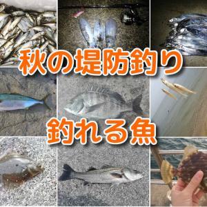 秋の堤防釣りで釣れる魚~魅力ある魚種が多い海釣りハイシーズン