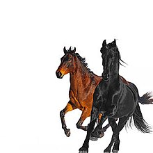 Lil Nas X/Old Town Road ft.Billy Ray Cyrus