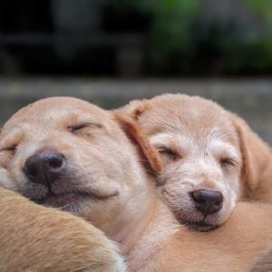 【睡眠】【不眠】よりよい睡眠のためのヒントお伝えいたします
