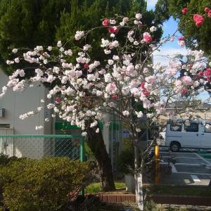 2020年4月_ももの木