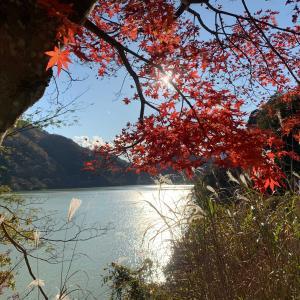 丹沢湖へ紅葉狩り