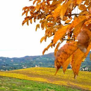 風に舞う葉、心に言う葉 Fine delle Colline Gialle