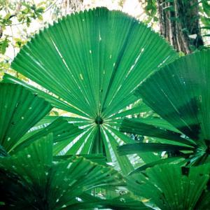 彼が夢みた地へ【後編】上 Queensland - Rainforest
