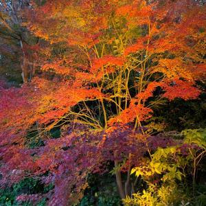 人生初の紅葉狩り @ 須磨離宮公園