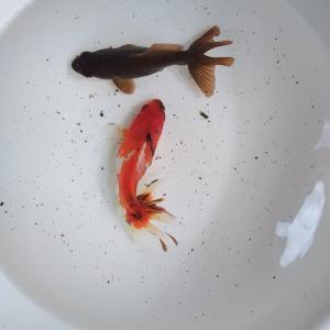 イノフェス魚の、現在。