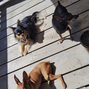 てんかん犬への水素吸入 ⑥