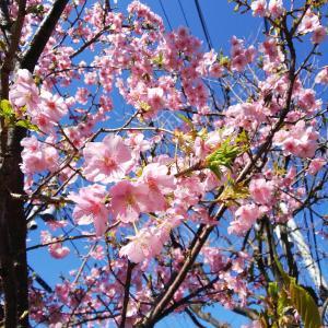 花も鳥も喜ぶ陽ざし