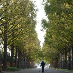 平塚市総合公園でお散歩