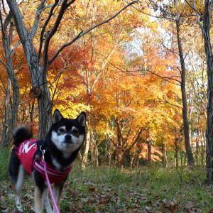 茅ヶ崎里山公園へおでかけ