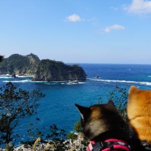 ぐるり伊豆の旅 2日目-2 : 堂ヶ島とセカチューと花の三聖苑