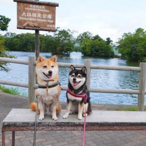 北海道の旅3日目-1|昭和新山と洞爺湖・大沼国定公園でお散歩