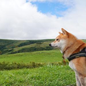 北海道の旅3日目-2|ラッキーピエロときじひき高原・函館山の夜景は・・