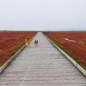 北海道の旅7日目|能取湖のサンゴ草と洗濯デー