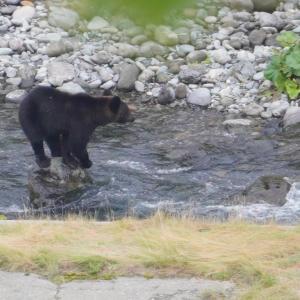 北海道の旅8日目-2|知床五湖観光でヒグマを発見・道の駅うとろシリエトクで車中泊