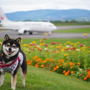 北海道の旅12日目-1|旭川空港・グリーンポート(空港公園)でお散歩