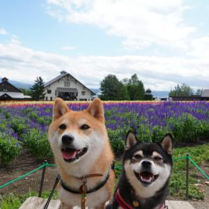 北海道の旅13日目-2|ファーム富田・とみたメロンハウス