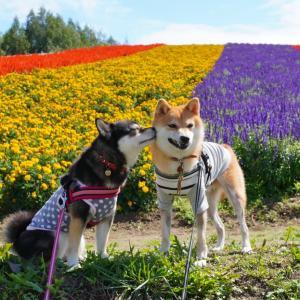 北海道の旅・まとめ|旅の費用や走行距離・観光ルートまとめ
